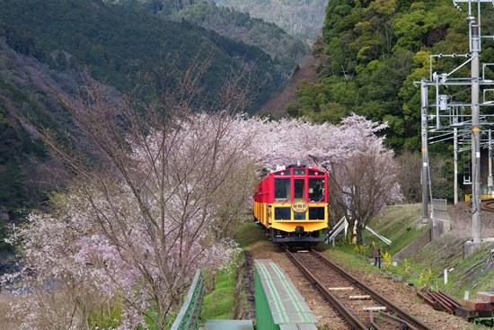 jalur-kereta-wisata-sagano